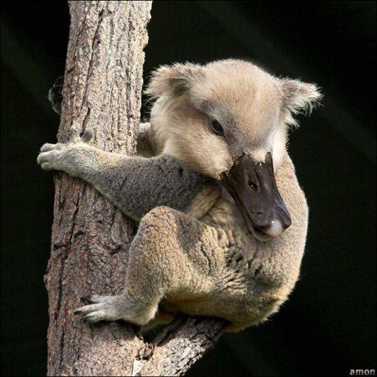 Wild Animal - Photoshop Manipulation #Funny #Images