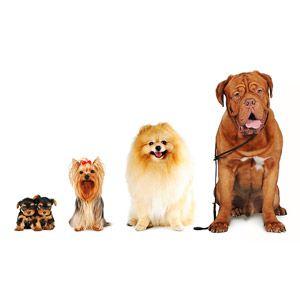 Pick-a-Pup Checklist #pets #animals