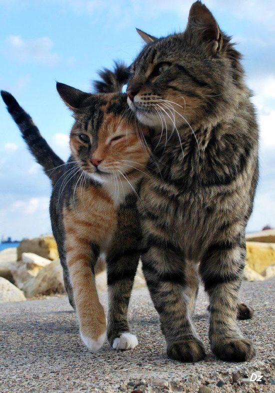 Beautiful pair