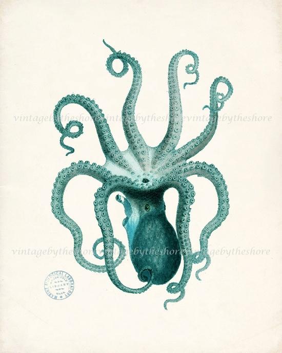 bathroom Vintage Teal Octopus Illustration - Natural History Wall Decor Digital Print, 8x10. $15.00, via Etsy.