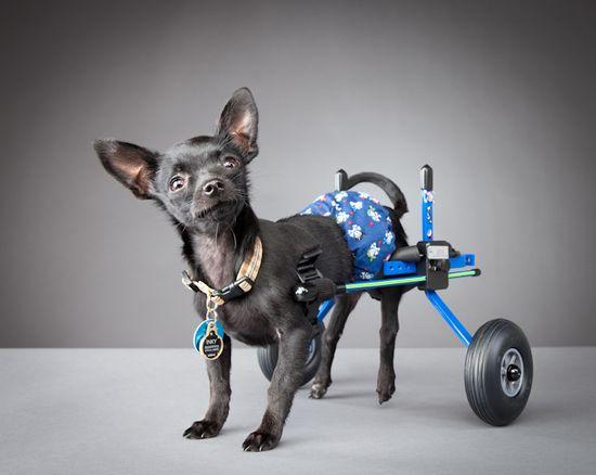 Pets with disabilities.    Photos by: Carli Davidson   Precious!