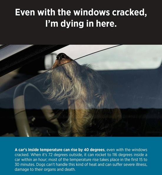 Please do not leave your pet in the car, even with the windows cracked!