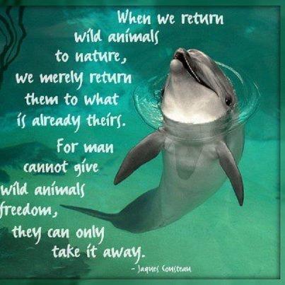 When we return wild animals to nature,...