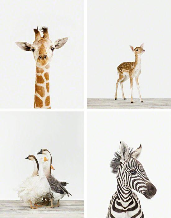 cute animal prints for a nursery
