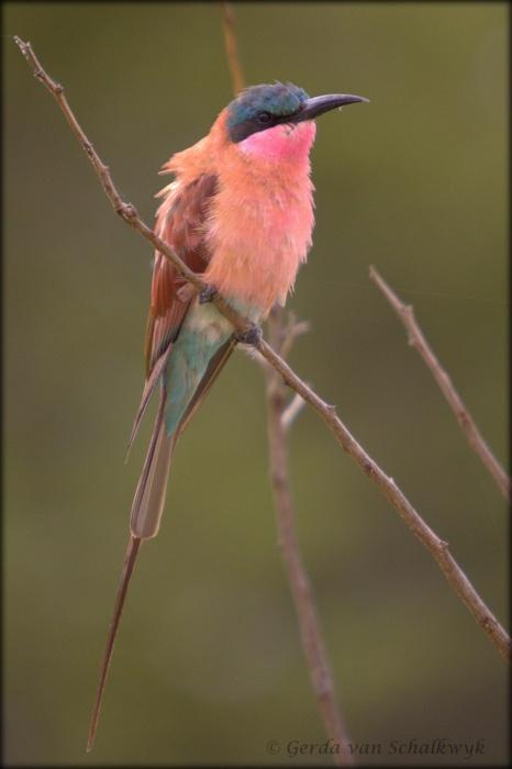 Colorful Pink Bird