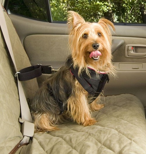 Pet Mobility Carts and Disability Aids Australia - Solvit Vehicle Safety Harness, $32.50 (www.pet-mobility-...)