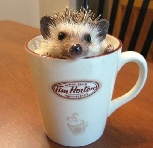 These Hedgehogs Are Sorry You Had A Rough Day