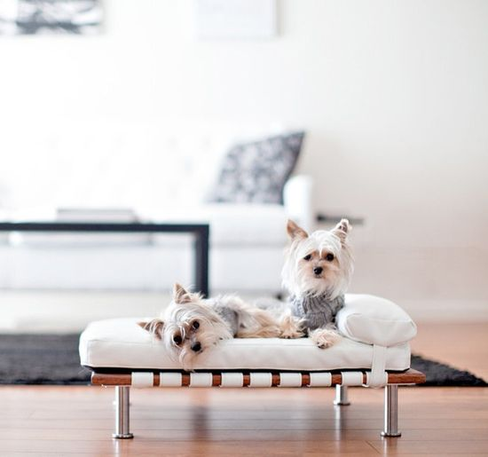 Modern Pet Daybed