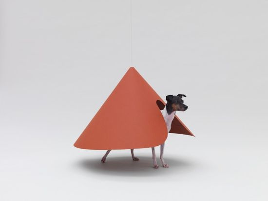 Canine Contemporary: Architecture for Dogs