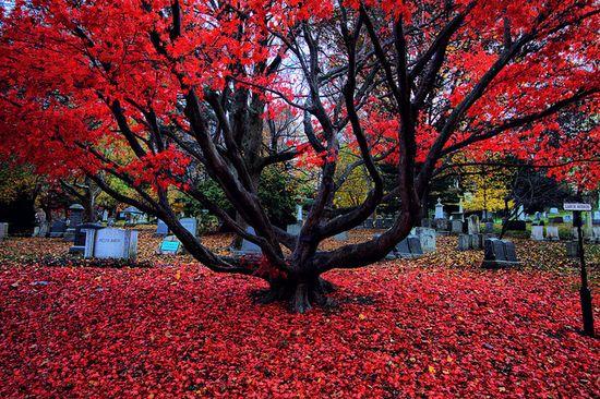 Mt. Auburn Cemetery.
