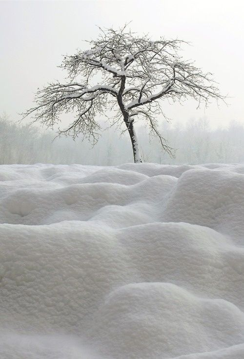 Love the snow.