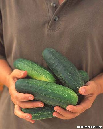 How to Grow Cucumbers by marthastewart #Cucumbers ##Vegetable_Growing_Guide #marthastewart