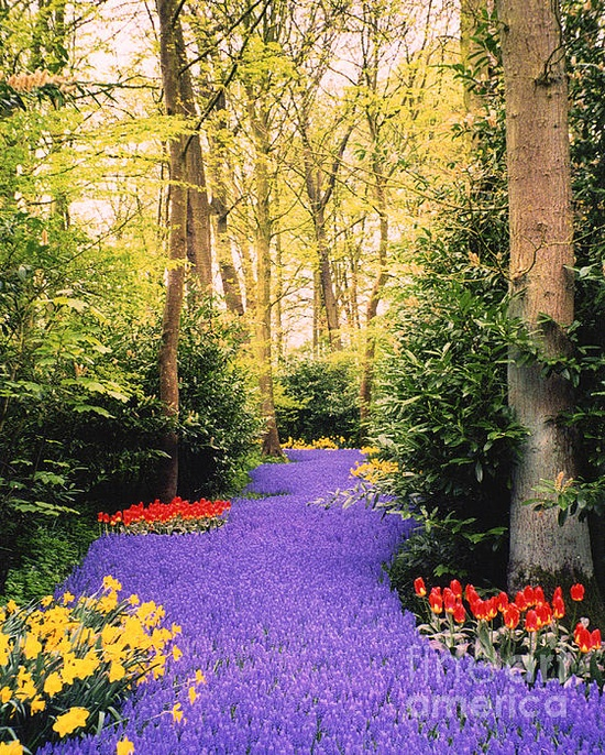? River of Flowers