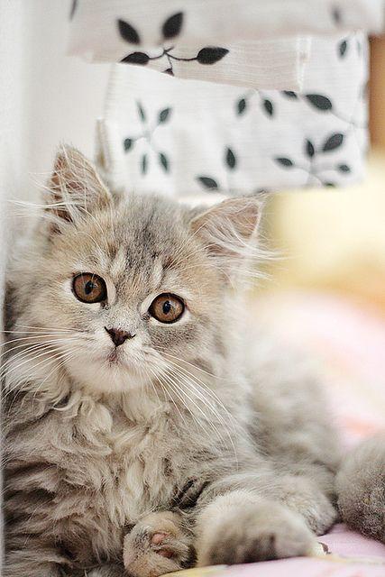 !  kitty cats...