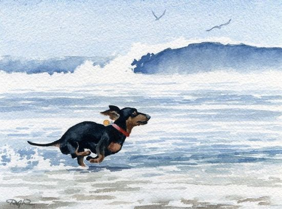 Weenie dog in the water!