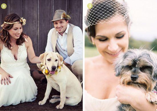 cutest-dogs-in-weddings_2