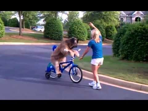 Dog Riding Bike - RANDOM CLIP - best-videos.in/...