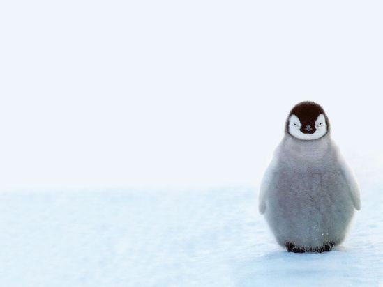 How can you not smile when looking at a baby penguin?