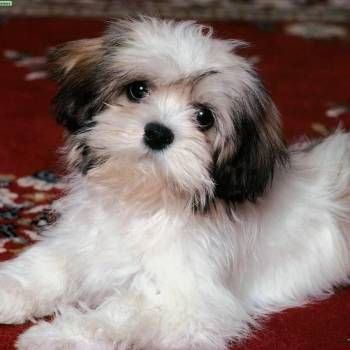 Cute #Baby #Animals List www.ranker.com/...