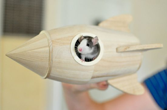 rats ? tiny wood spaceships