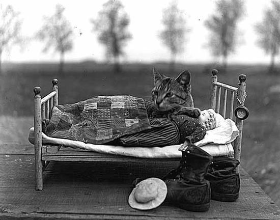 A cute 1915 photo of a cat lying down in a doll's bed. Image taken by Louis Enstrom. #vintage #Edwardian #cats #kitties #pets