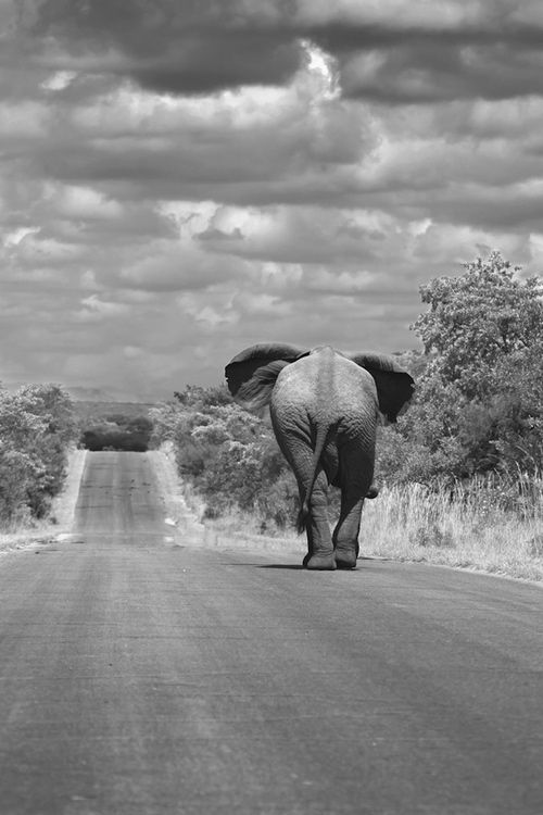 I want to ride on an elephant one day.