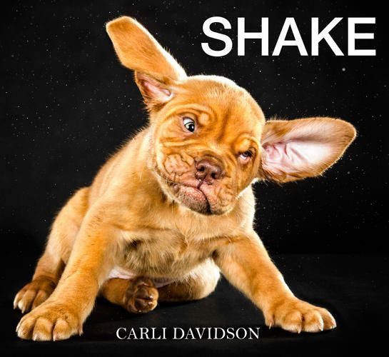 Shaken Not Stirred ~ Funny Photos Of Wet Dogs Shaking