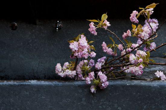 Flower Pot-Luck > Nicole Franzen Photography