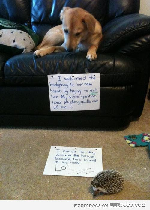 Funny story of dog and hedgehog