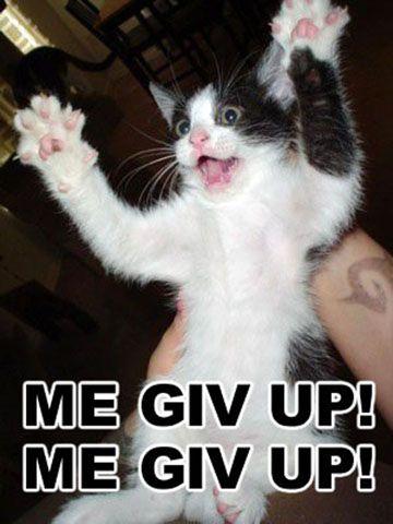 Funny Cat Photos -