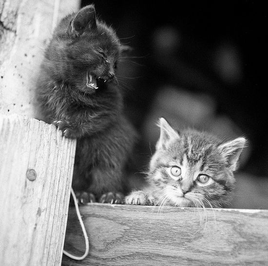 {Barn Kittens} so much cuteness!