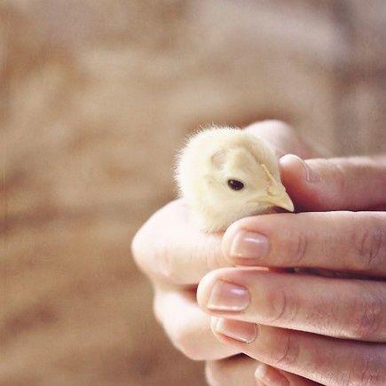 .#Cute pet #pet girl