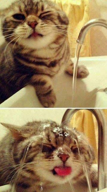 haha he's washing his head!