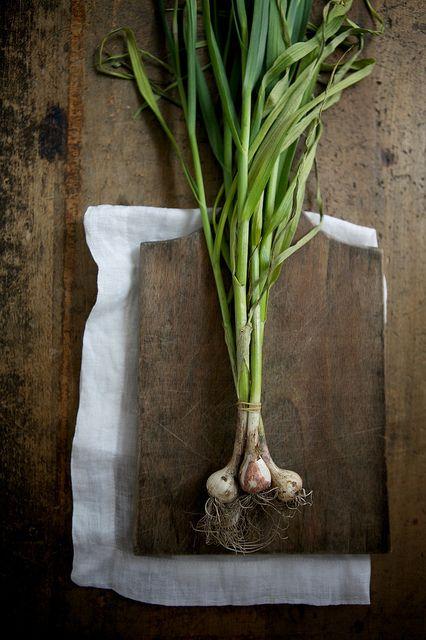 green garlic by Nicole Franzen