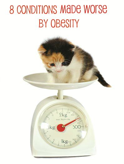 Obesity in pets is a catalyst for several dangerous medical conditions. According to Petplan pet insurance claims data, the most common maladies resulting from overweight pets include severe immobility, fractures, spinal disc disease, heart disease, hip dysplasia and ligament tears.