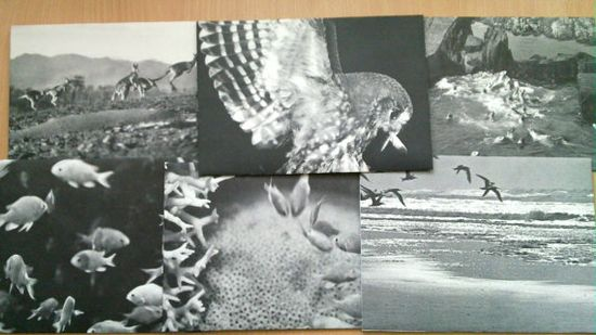 black and white animal envelopes