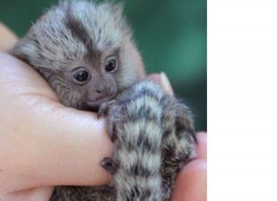 Top 10 Cutest Baby Animals Ever You Want To Put In Your Hand