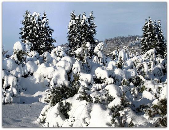 snow snow snow...