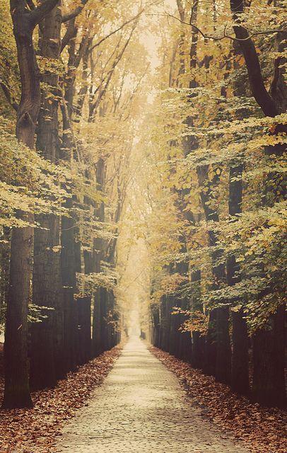 autumn lane / Bruges, Belgium