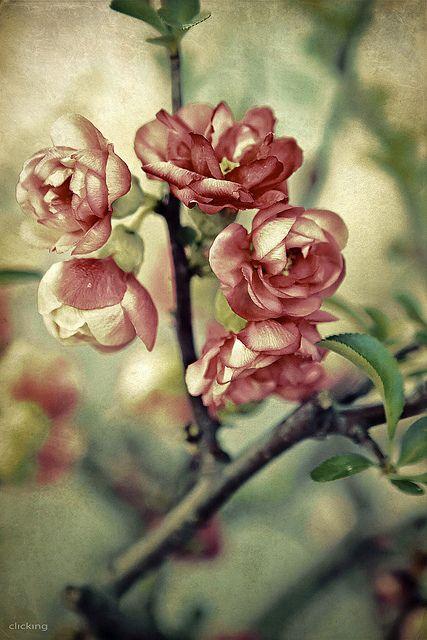 ~~ A rose is a rose is a rose is a rose by -clicking- ~~