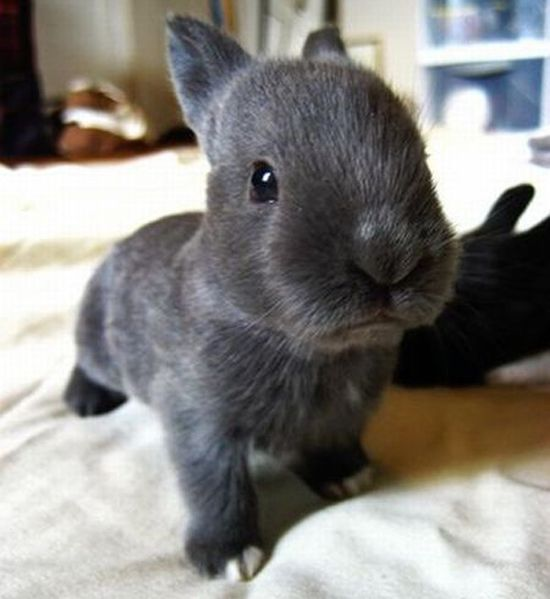 baby bunny!So cute!