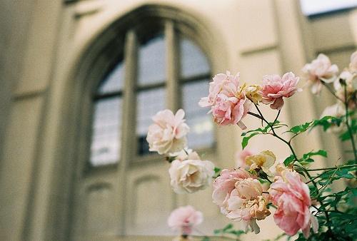 Roses, love them