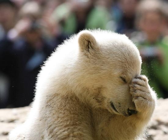 Polar bear cuteness