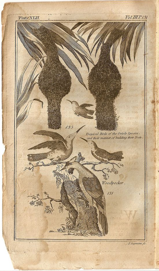 An History of the Earth and Animated Nature Vol. III, 1795 Oliver Goldsmith __ Plate XLII, from Vol III of a 4 volume set. Tropical Birds of the Oriole Species and their manner of building their nests. _ via Flickr