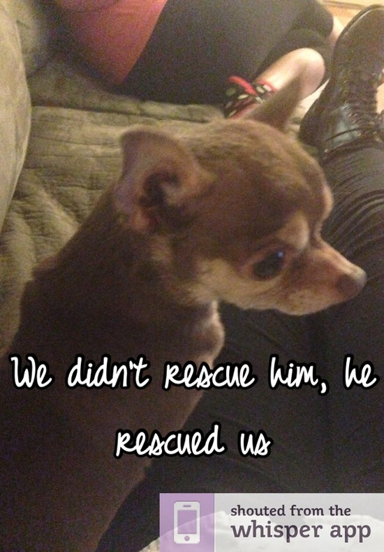 We didn't rescue him, he rescued us! So true!! They do rescue you!!