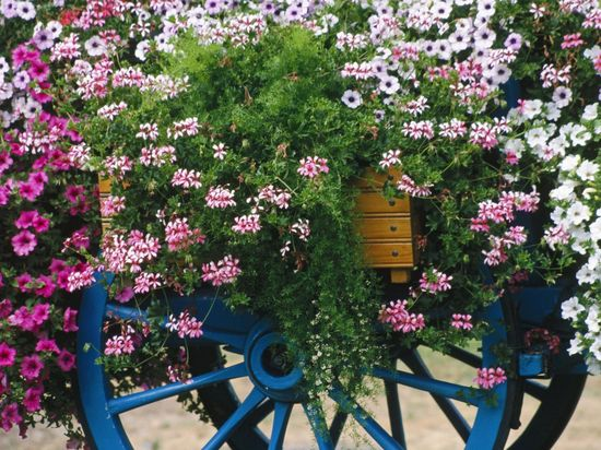 Colorful flower cart