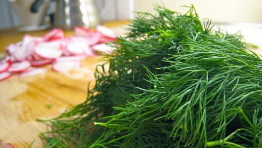 5 recipes for the fresh dill growing in your garden now