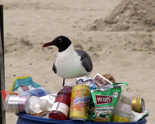 6 animals that recycle in their everyday lives #birds #animals #recycle