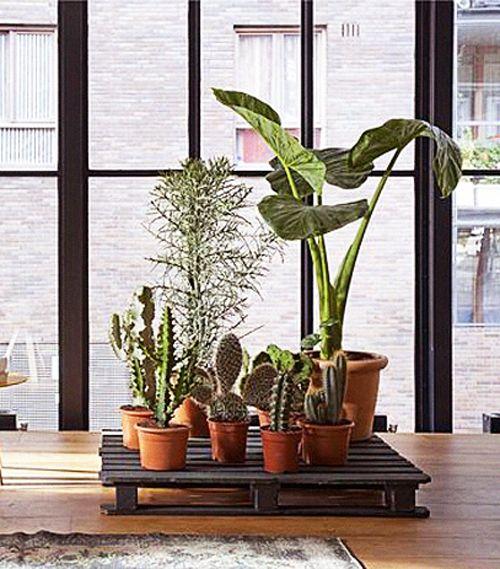 plant pallet
