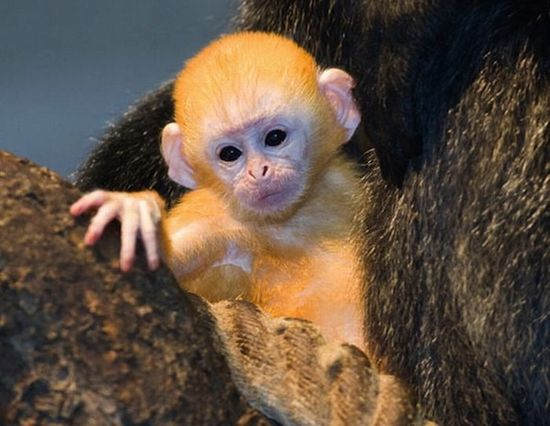 Baby Animals So Ugly They're Cute #baby animal #cute